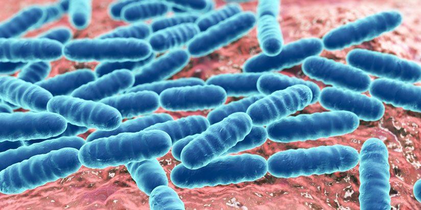 probiotik-bakterii-bulvit